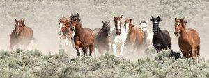 WildHorsesRunning-MustangMonument(c)AaronMillar
