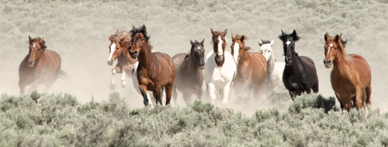 Image result for wild horses